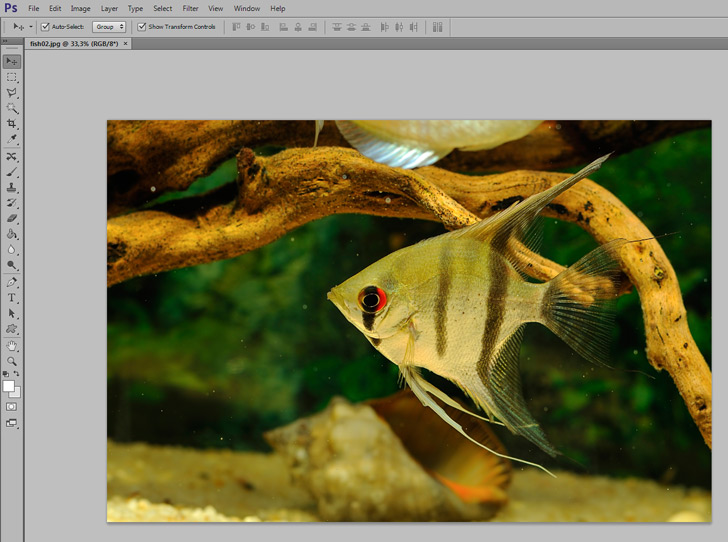 crop images in photoshop step 1