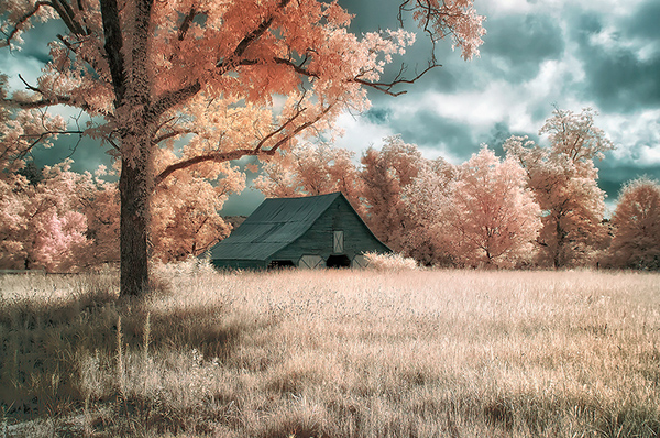 infrared photography 19