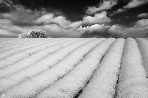 infrared photography 23