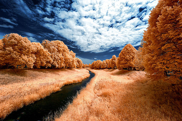 infrared photography 25