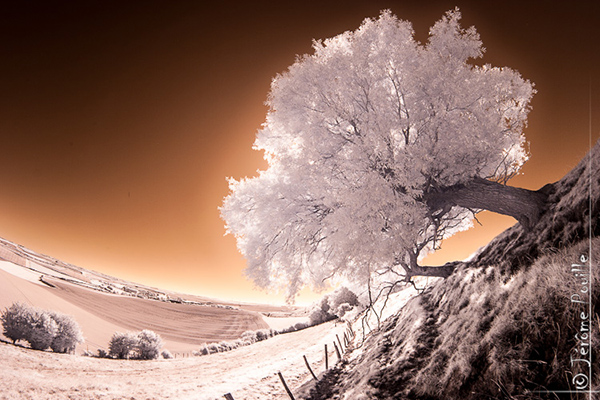 amazing infrared photography 29