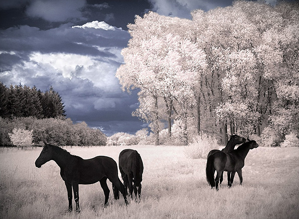 amazing infrared photography 33