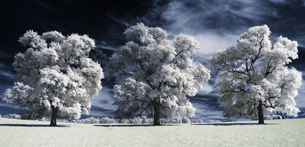 amazing infrared photography (1)