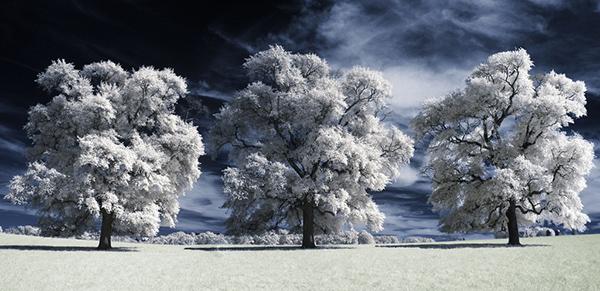 amazing infrared photography (1)