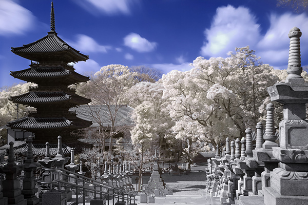 amazing infrared photography (10)