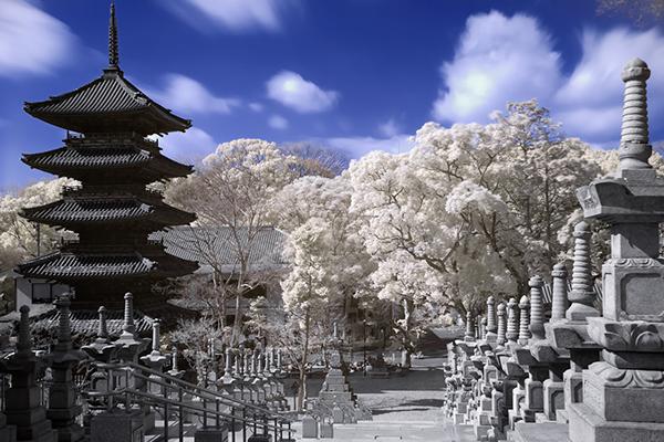 amazing infrared photography (10)