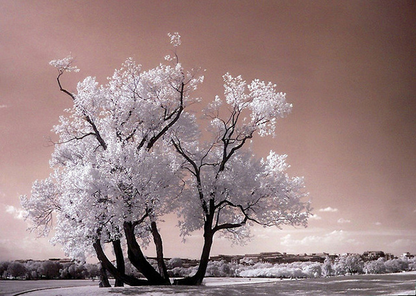 amazing infrared photography (11)