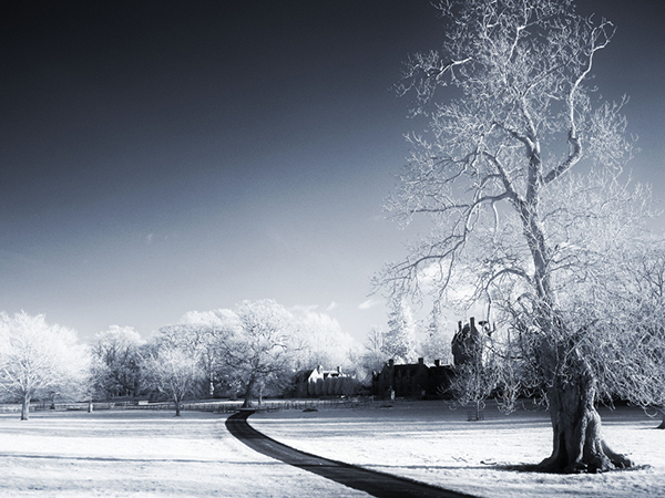 amazing infrared photography (14)