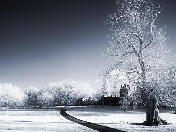 amazing infrared photography (14)