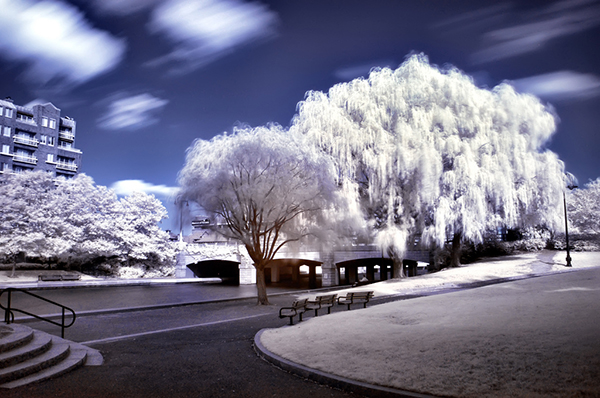 amazing infrared photography (8)
